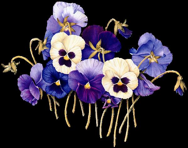 Fleurs des pensees page 8 - Tatouage pensee fleur ...