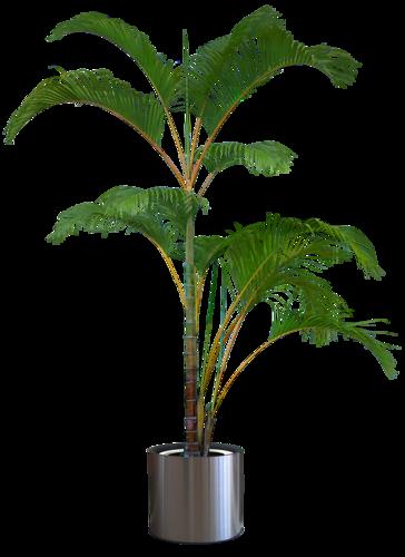 Tubes plante verte page 9 - Decorer un vase transparent ...