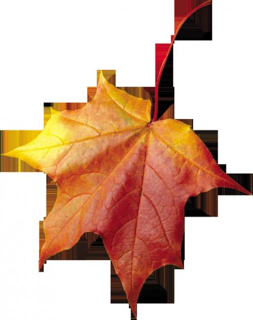 Les feuilles d'automne 049744e7