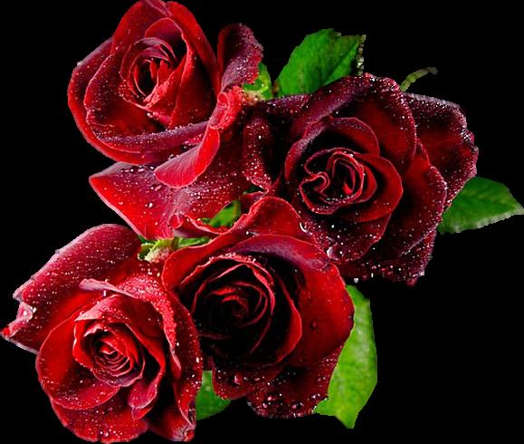 http://magnolias.m.a.pic.centerblog.net/0792c6c6.png?0.11162758967839181