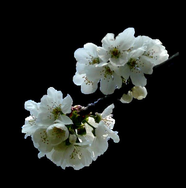 http://magnolias.m.a.pic.centerblog.net/0cc59fa6.png?0.22249776544049382