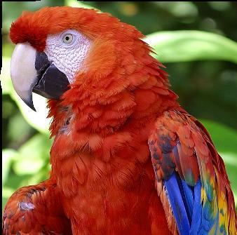 Oiseaux Exotique
