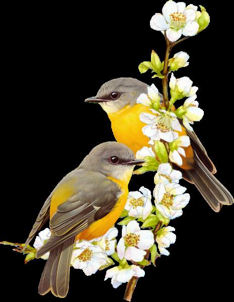 Тэги. природа. счастье. нежность. весна. Звук. красота. настроение. музыка