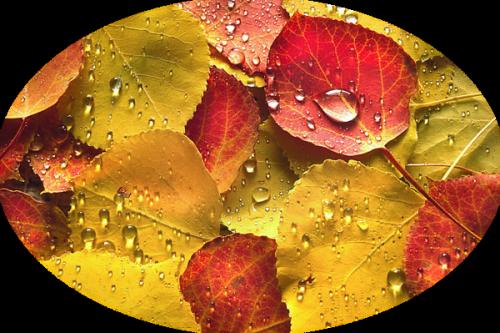Les feuilles d'automne 31c41ef3