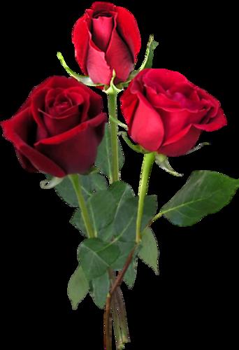Photo Fleur Rose Rouge Idee D Image De Fleur