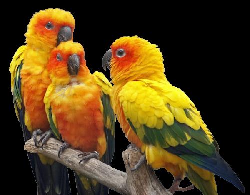 oiseaux exotiques - Page 11