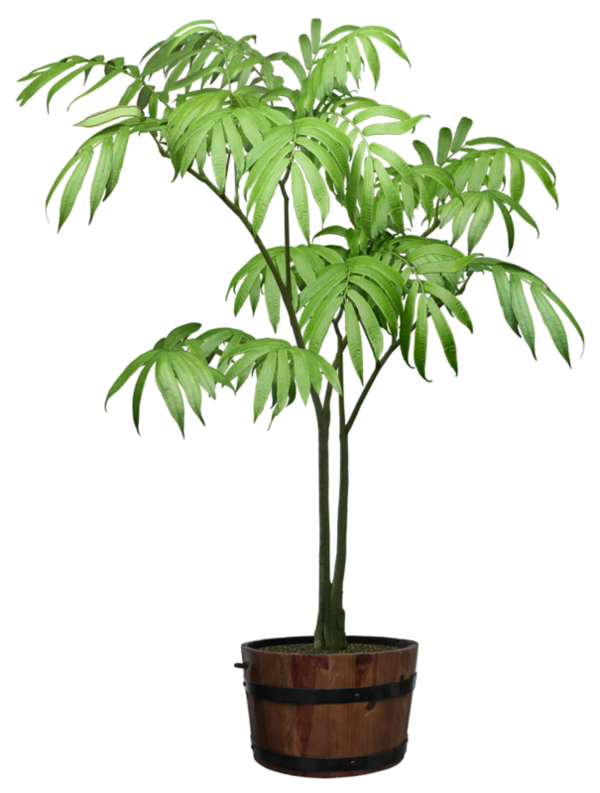 Tubes plante verte - Belle plante verte d interieur ...