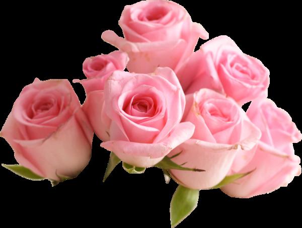 Fleurs ( roses )