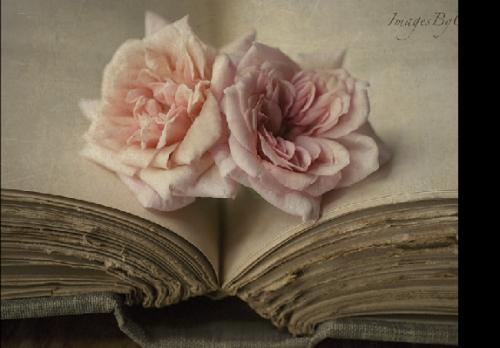 http://magnolias.m.a.pic.centerblog.net/6d032073.png?0.002802994567900896