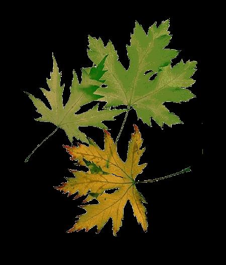 Les feuilles d'automne 761cb440