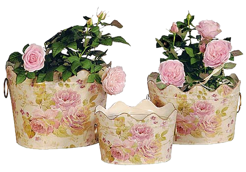 http://magnolias.m.a.pic.centerblog.net/78abc73c.png?0.5460531013086438