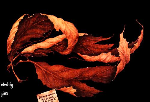 Les feuilles d'automne 7cd4e26d