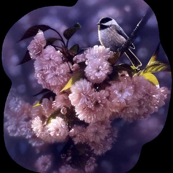 http://magnolias.m.a.pic.centerblog.net/7e6156a2.png?0.17691296222619712