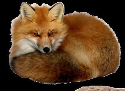 Tubes animaux renard - Clipart renard ...