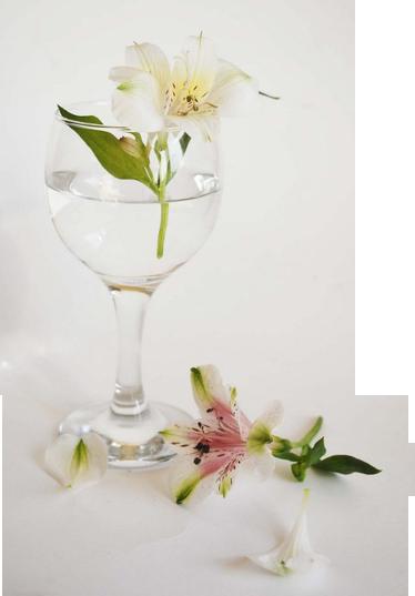 http://magnolias.m.a.pic.centerblog.net/a0e40d01.png?0.6901294912677258