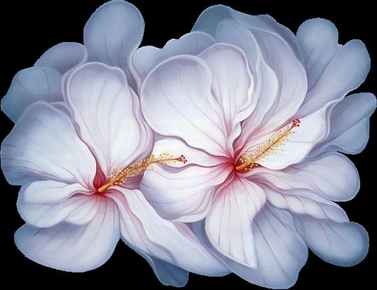 http://magnolias.m.a.pic.centerblog.net/a3cf0cba.png?0.16539838956668973
