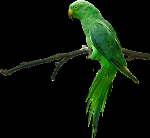 Oiseaux ( exotique )