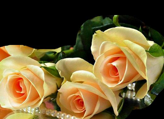 http://magnolias.m.a.pic.centerblog.net/c876709d.png?0.880528825102374
