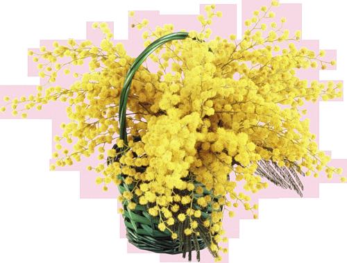 Résultat d'images pour Gifs bonsoir bouquet de mimosa
