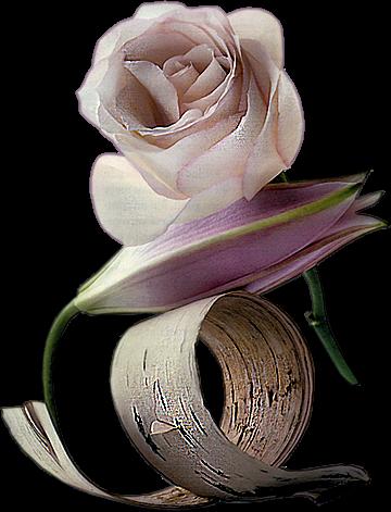 http://magnolias.m.a.pic.centerblog.net/d3ef58a7.png?0.8220053212717175