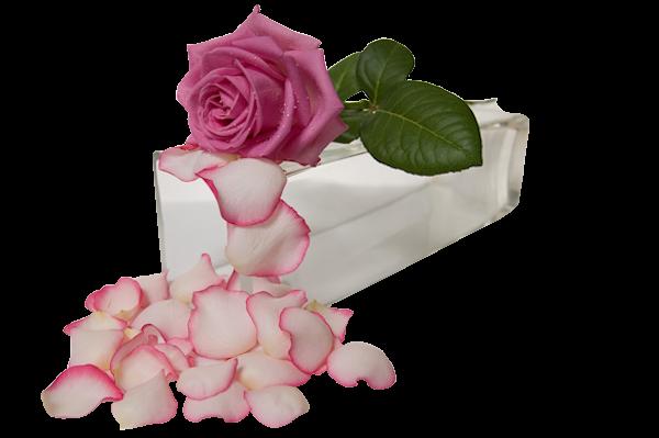 http://magnolias.m.a.pic.centerblog.net/dc573975.png?0.4880562904290855