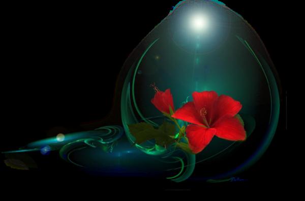 http://magnolias.m.a.pic.centerblog.net/dcccd310.png?0.5914755340199918