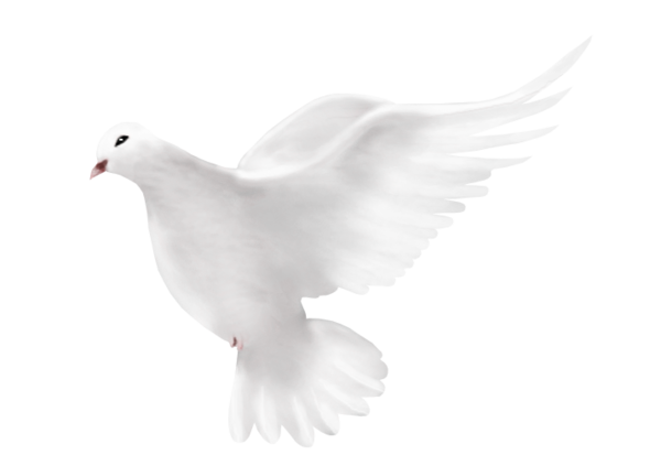 Dove png file