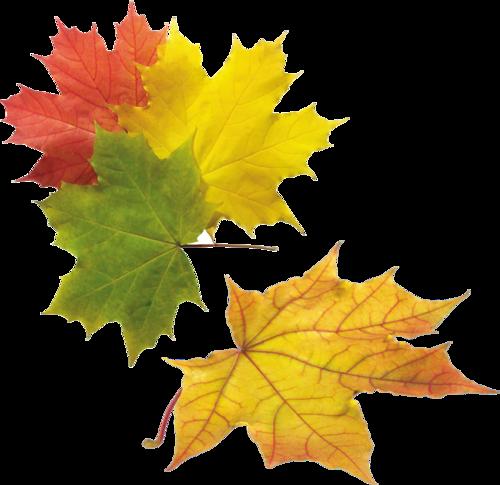 Feuilles automne - Image feuille automne ...