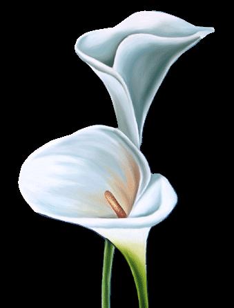 Coloriage Fleur Arum.Dessin Arum Fleur Grand Roissy