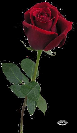 http://magnolias.m.a.pic.centerblog.net/f87e38a3.png?0.30830407654866576