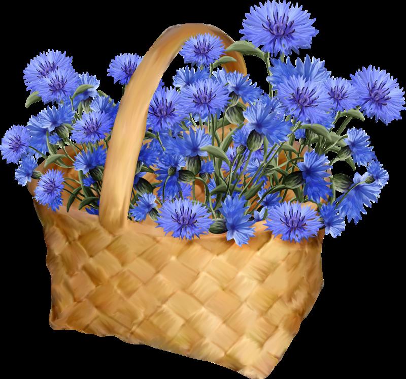 Tubes Fleurs Bleuets