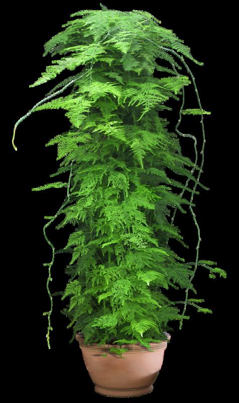 Tubes plante verte page 2 for Recherche sur les plantes vertes