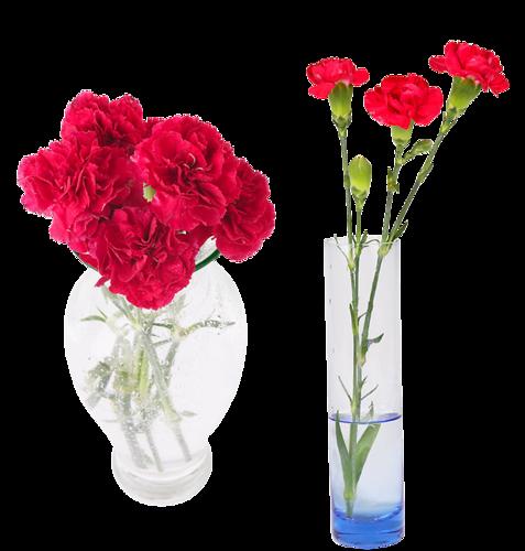 fleur dans vase transparent fleurs dans vase vase of flowers pinterest dan free photo tulips. Black Bedroom Furniture Sets. Home Design Ideas