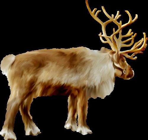 Tubes animaux de la foret - Image rennes noel ...