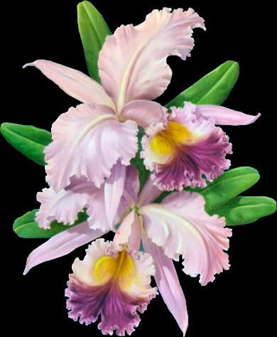 fleurs orchidees page 10. Black Bedroom Furniture Sets. Home Design Ideas