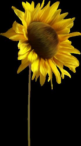 Fleurs Tournesol